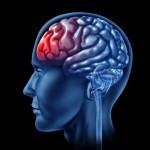 Psykologi - menneskehjerne med rød frontallap